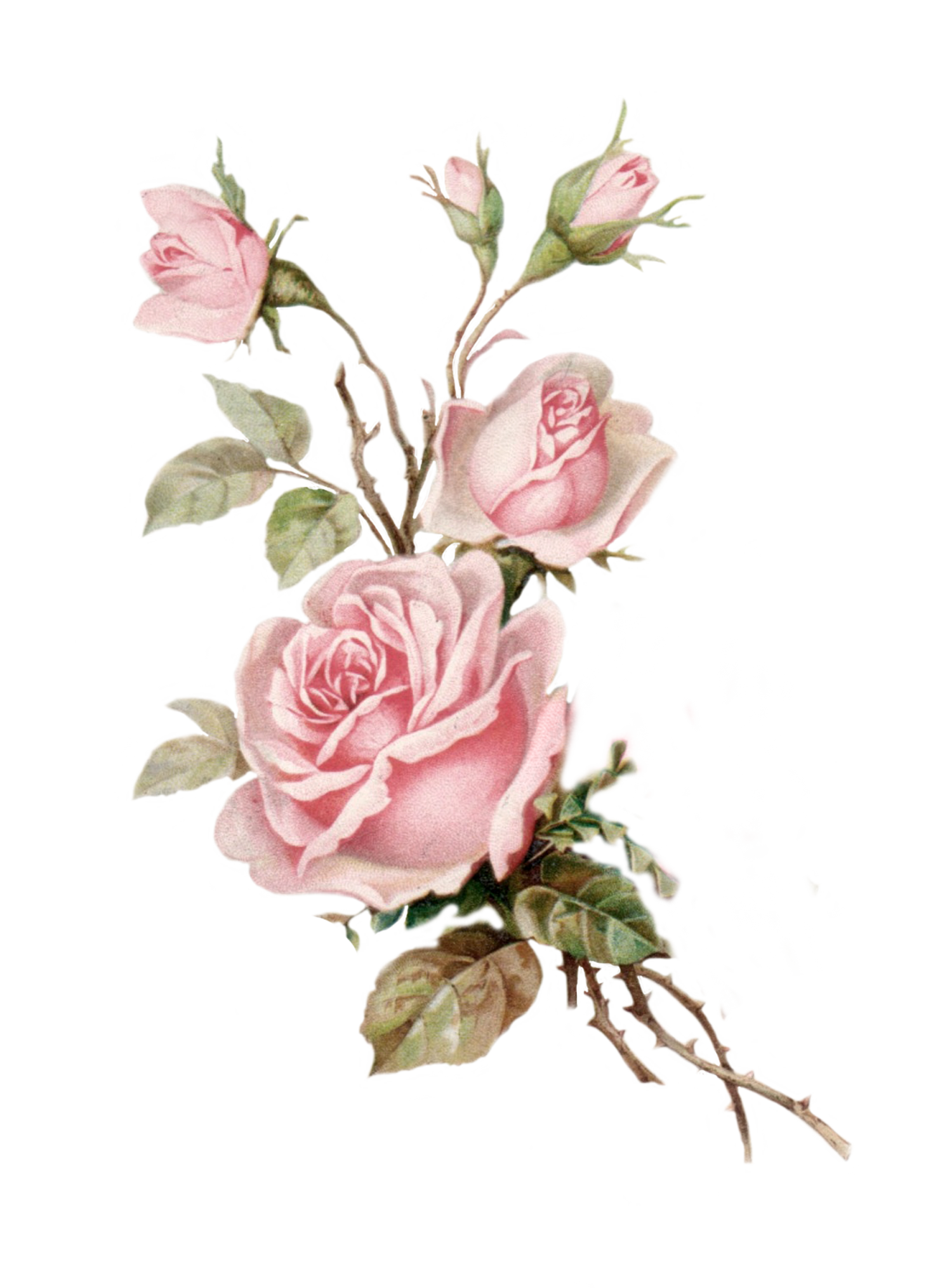 Pink floral png. Vintage rose cut out