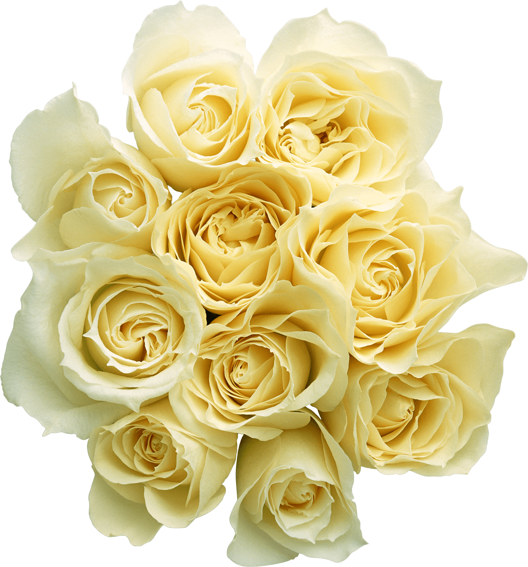 20 Bouquet Of White Roses Png For Free Download On Ya Webdesign