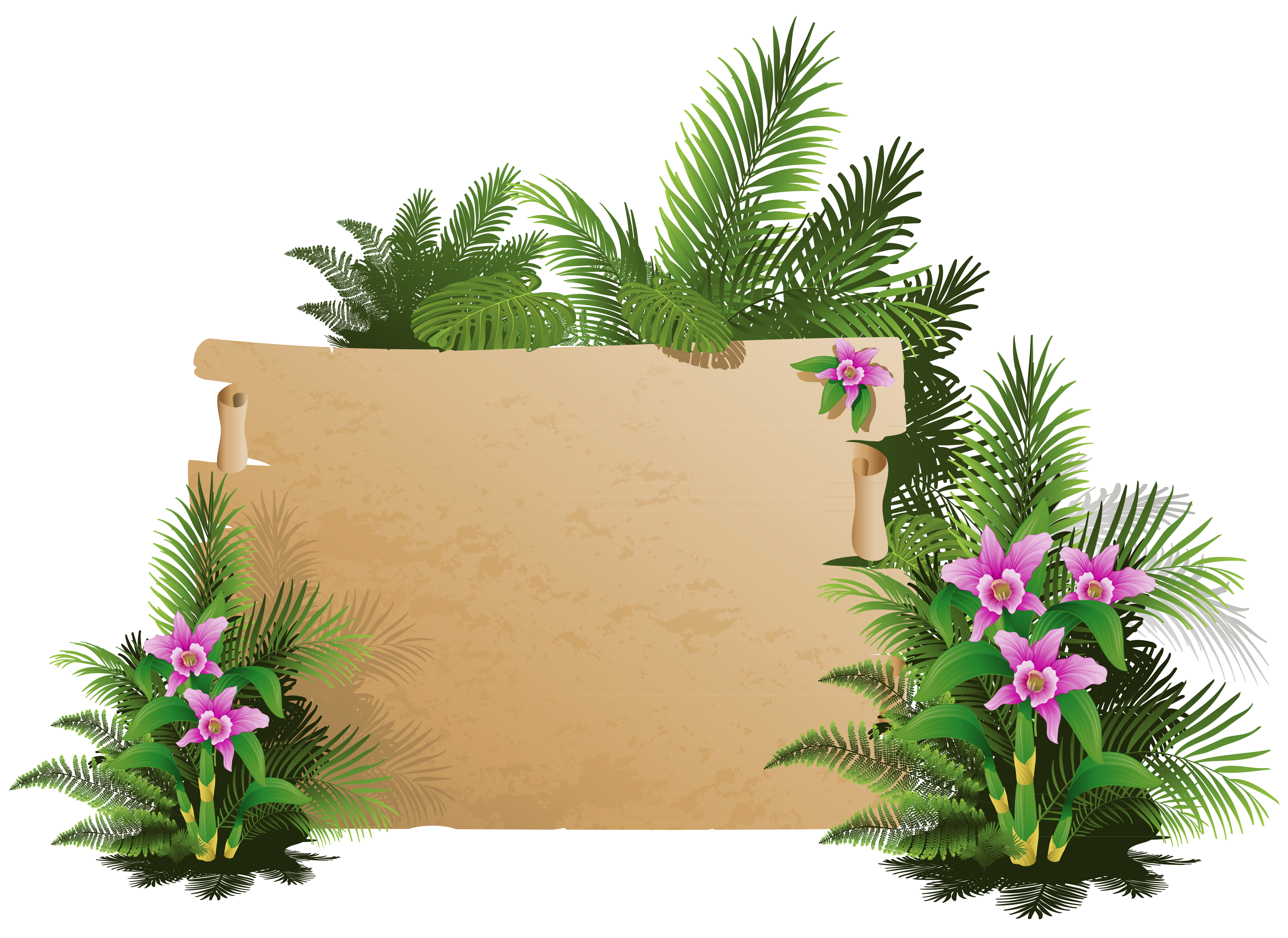 Board clipart frame. Summer exotic png gallery