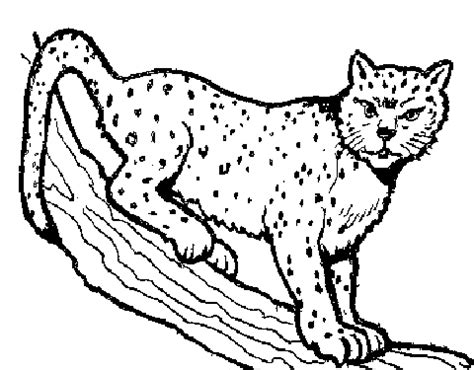 Bobcat clipart lineart. Black and white