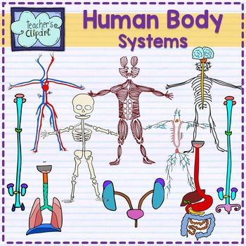 Body clipart body system. Human systems bundle science