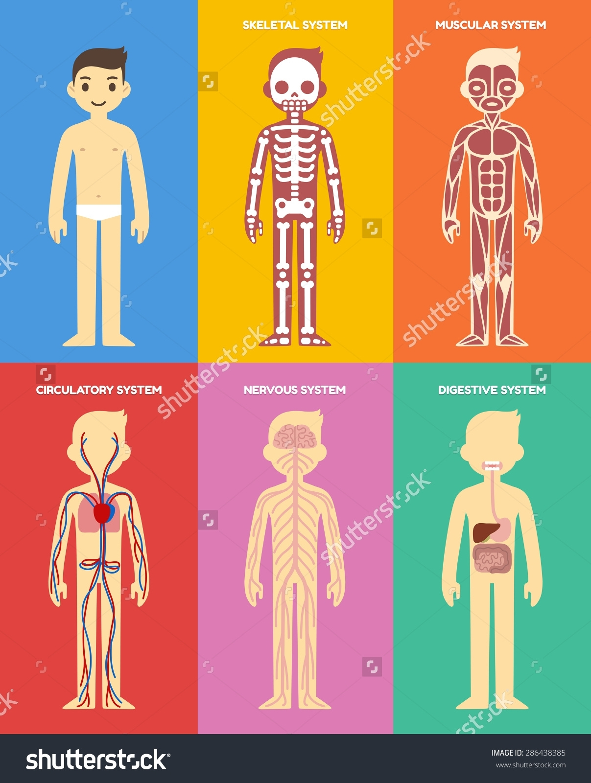 Body clipart body system. In human cartoons clipartfest