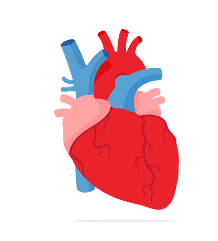 Body clipart illustration. Heart in free icons