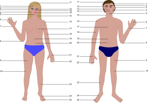 Body clipart public. Human man and woman