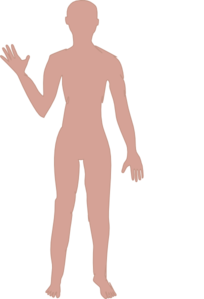 Body clipart whole body. Full image