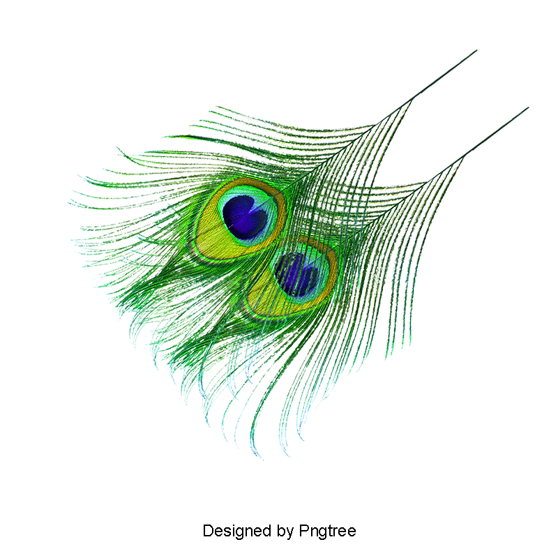 Floating feathers png. Feather peacock decorative material