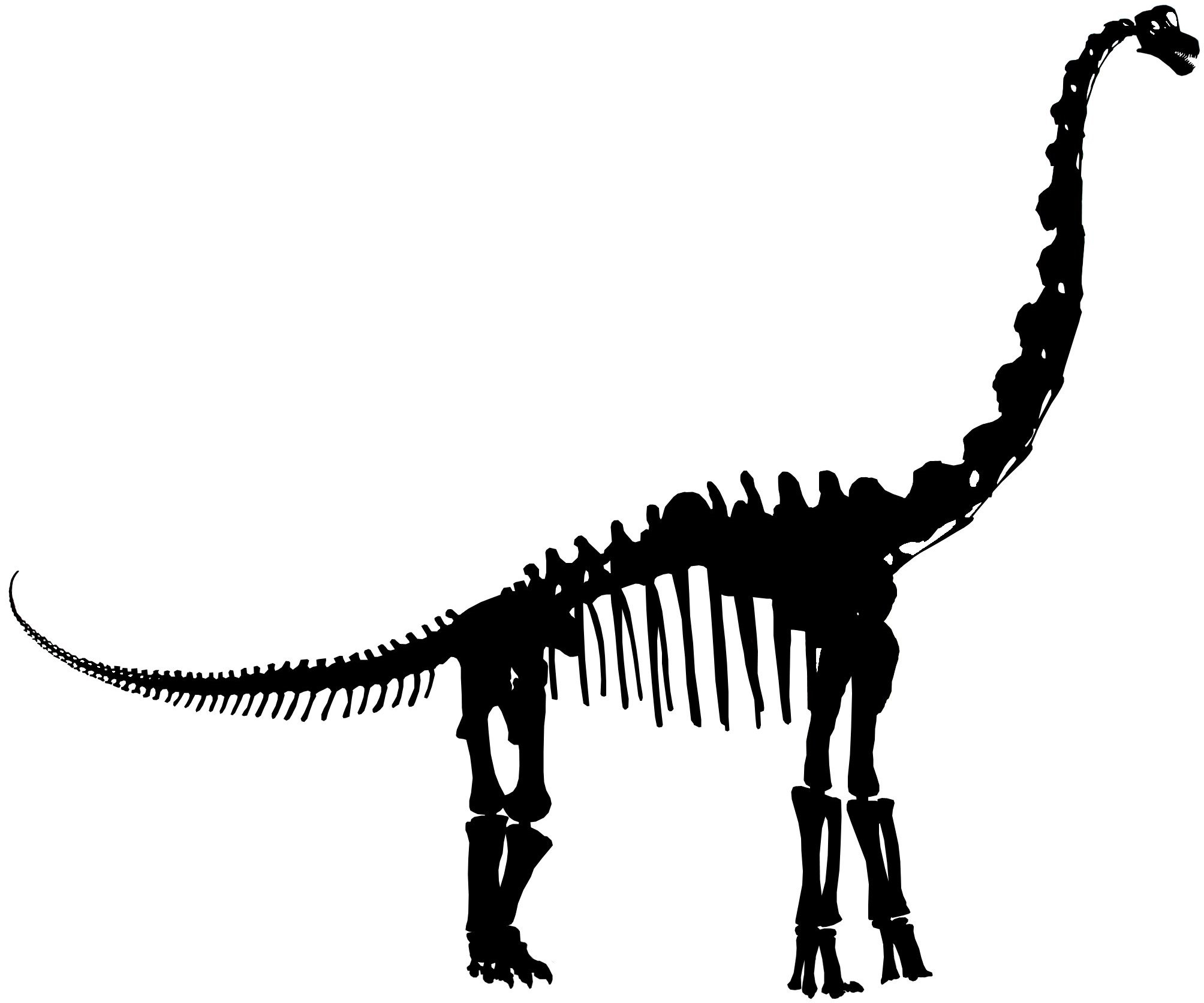 Bone clipart dinosaur bone. Head silhouette at getdrawings