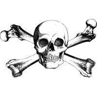 Bone drawing png. Download skull category clipart