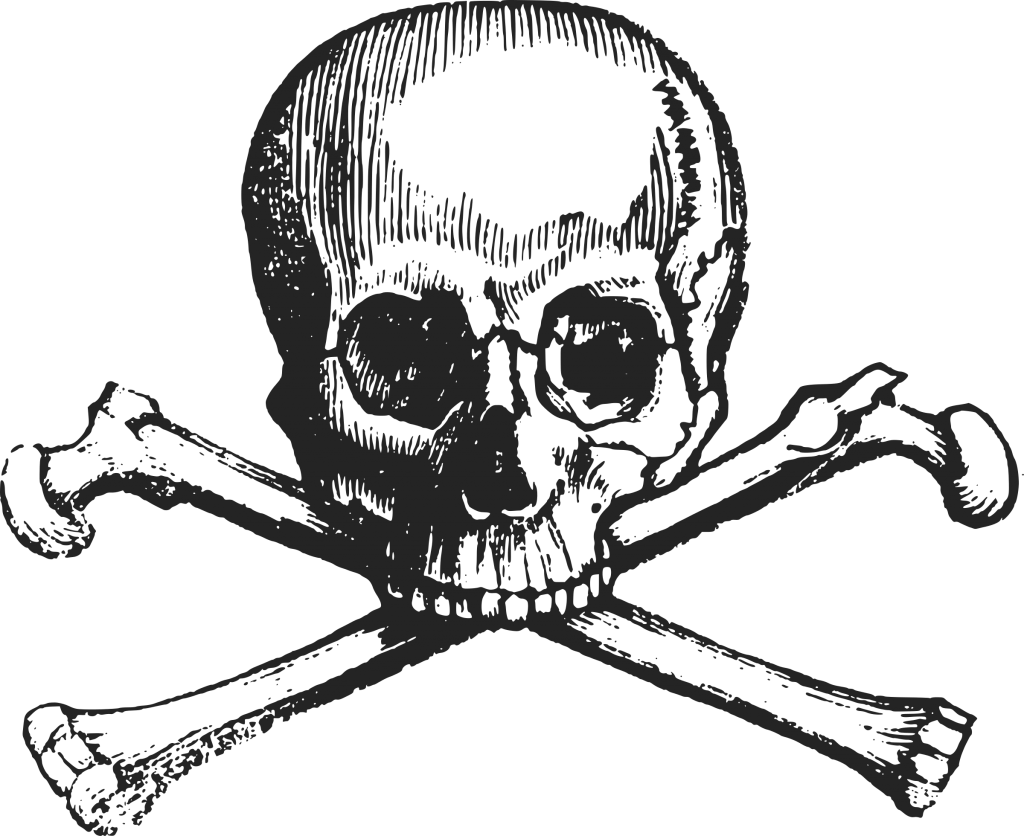 Vector bone illustration. Skull bones transparent background