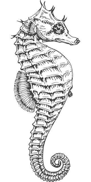 Bookmark drawing seahorse. Free image on pixabay