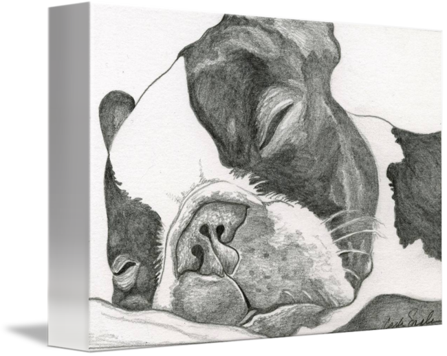 Matisse drawing graphite. Boston terrier by carla