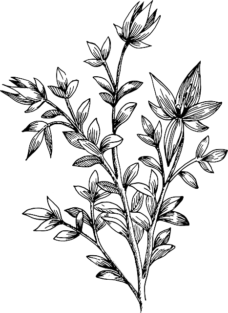 Flower drawing cerca con. Botanical vector clipart freeuse library