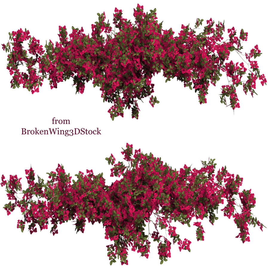 bougainvillea drawing tree