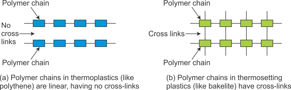 Locust drawing labelled diagram. Explain along with examples