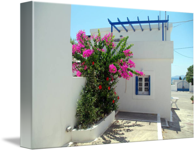 Bougainvillea drawing scientific. Whitewashed house with by