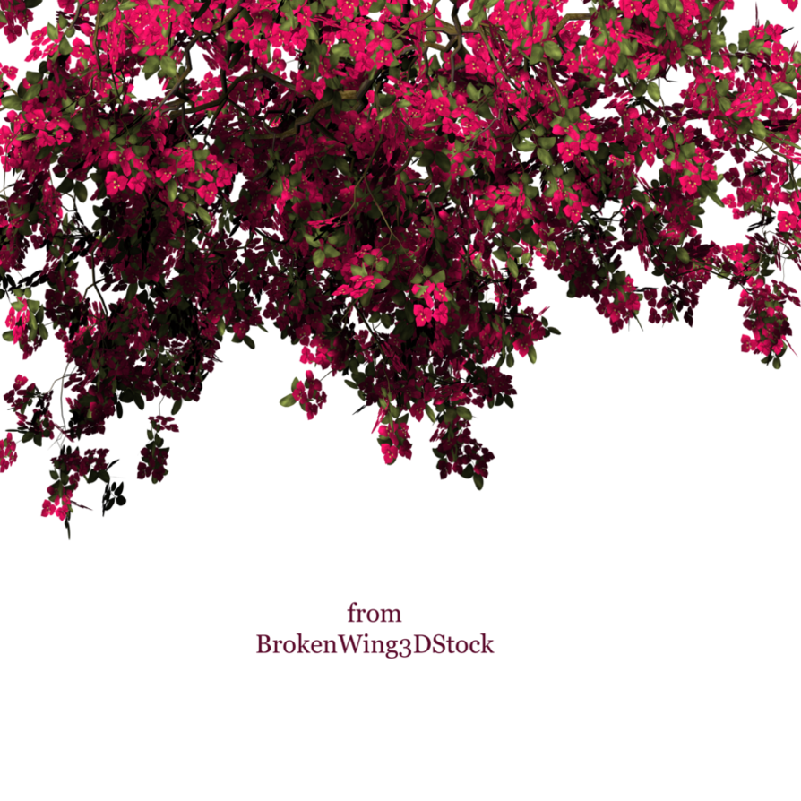 Bougainvillea drawing simple. By brokenwing dstock on
