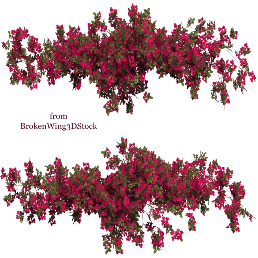 Bougainvillea drawing sketch. By brokenwing dstock on