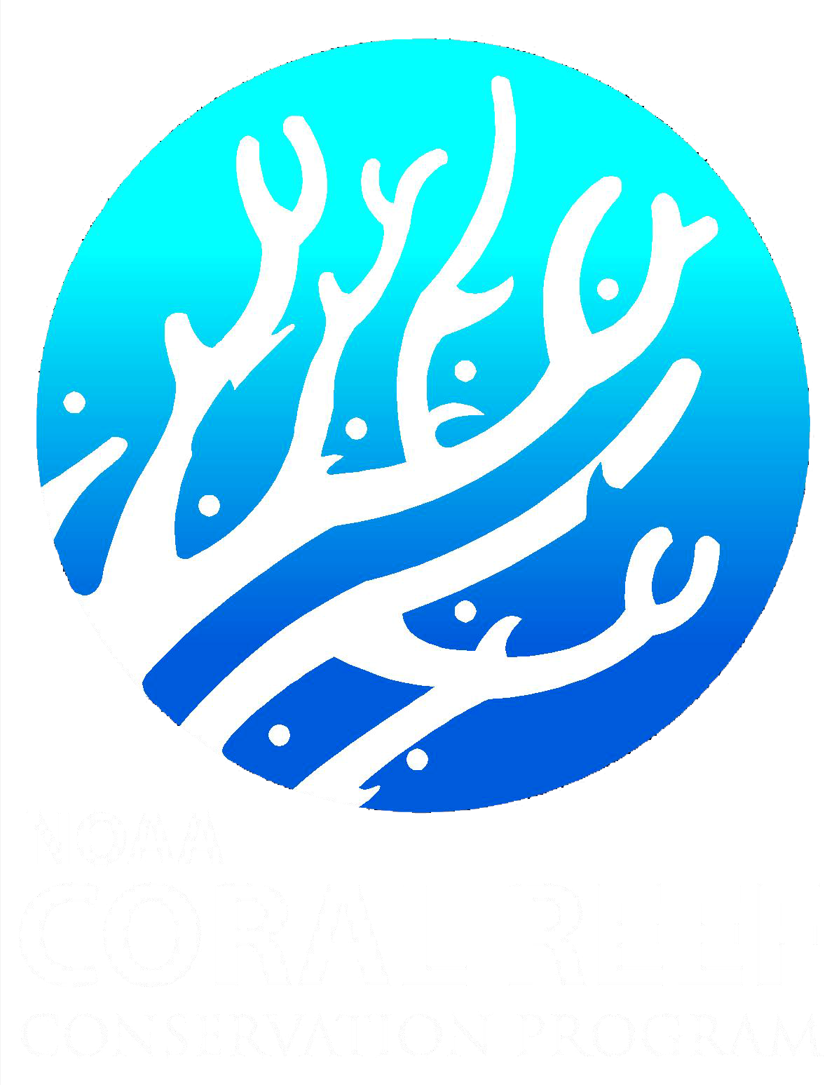 Boulder drawing coral reef. Noaa coris what are