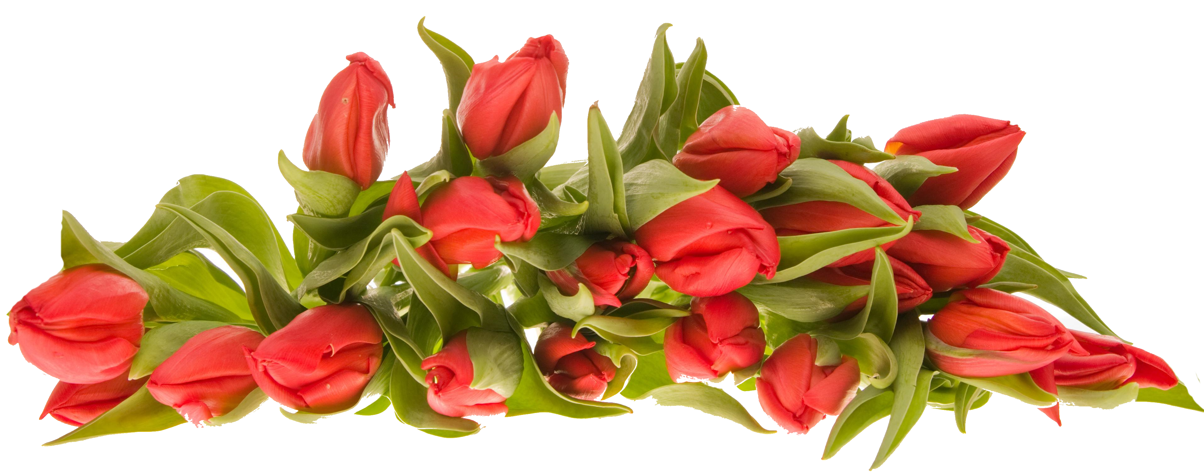 Bouquet of icon web. Flowers png jpg library library