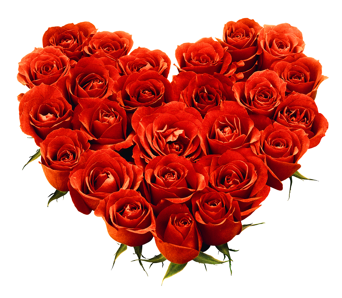 Bouquet of roses png. Image free picture download