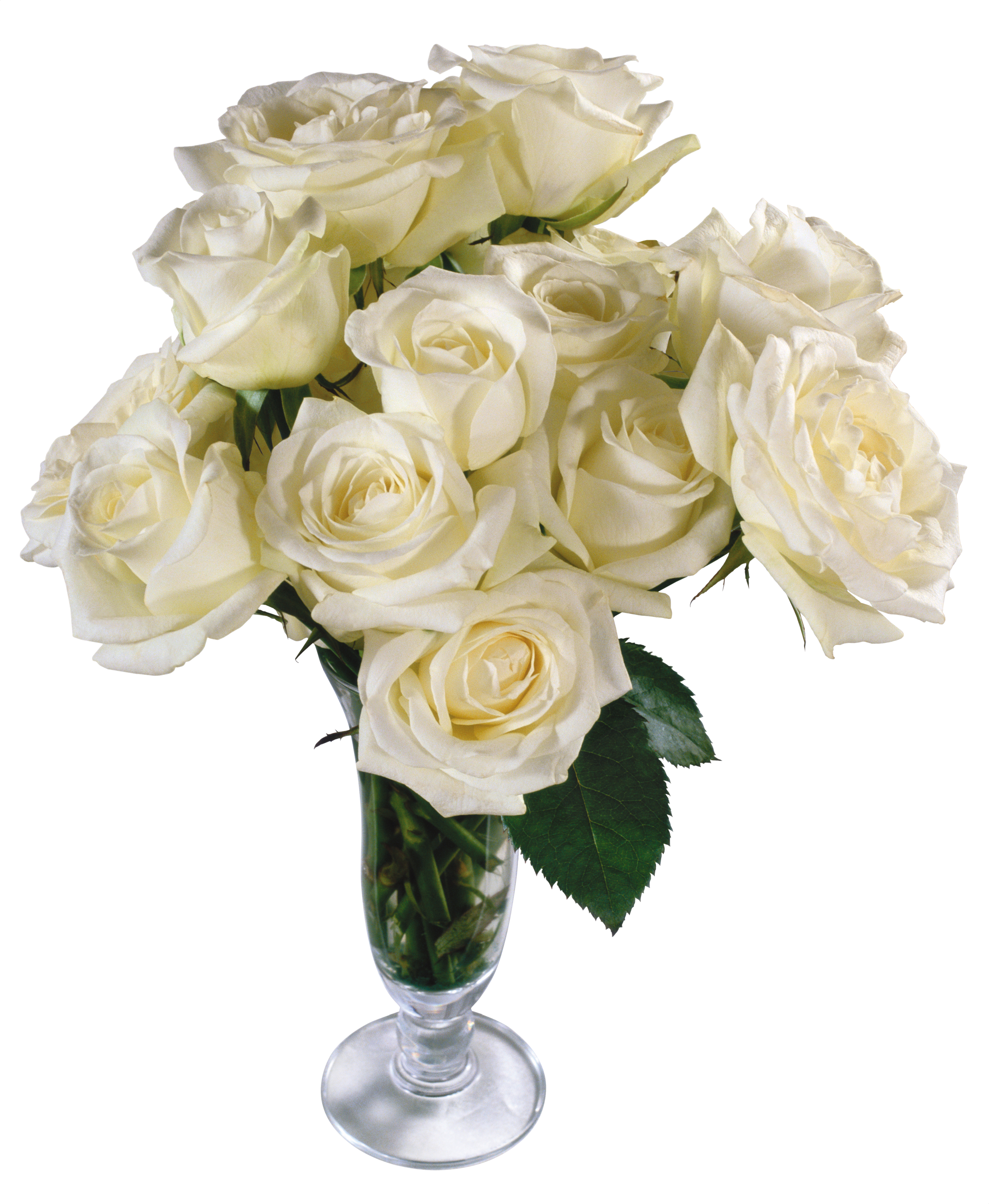 Bouquet of white roses png. Images free download flower