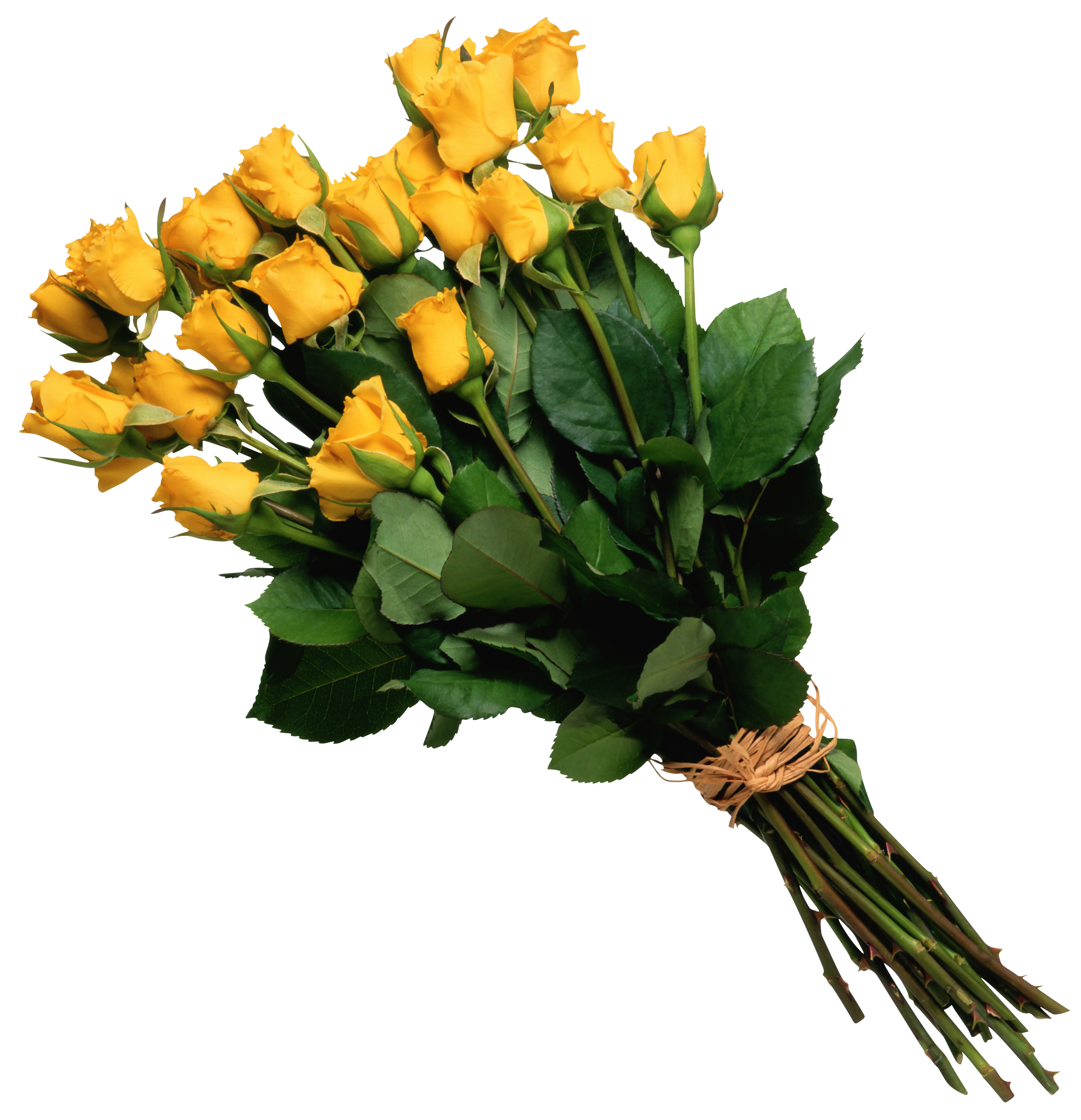 Bouquet of yellow roses png. Rose picture gallery yopriceville