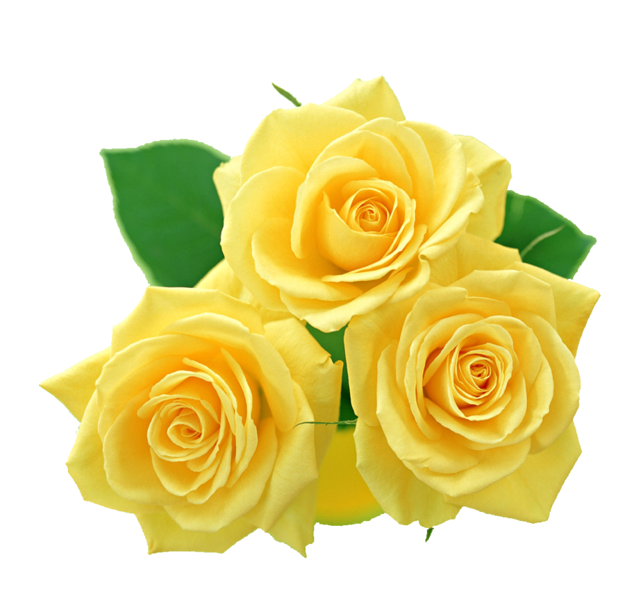 Bouquet of yellow roses png. By melissa tm on