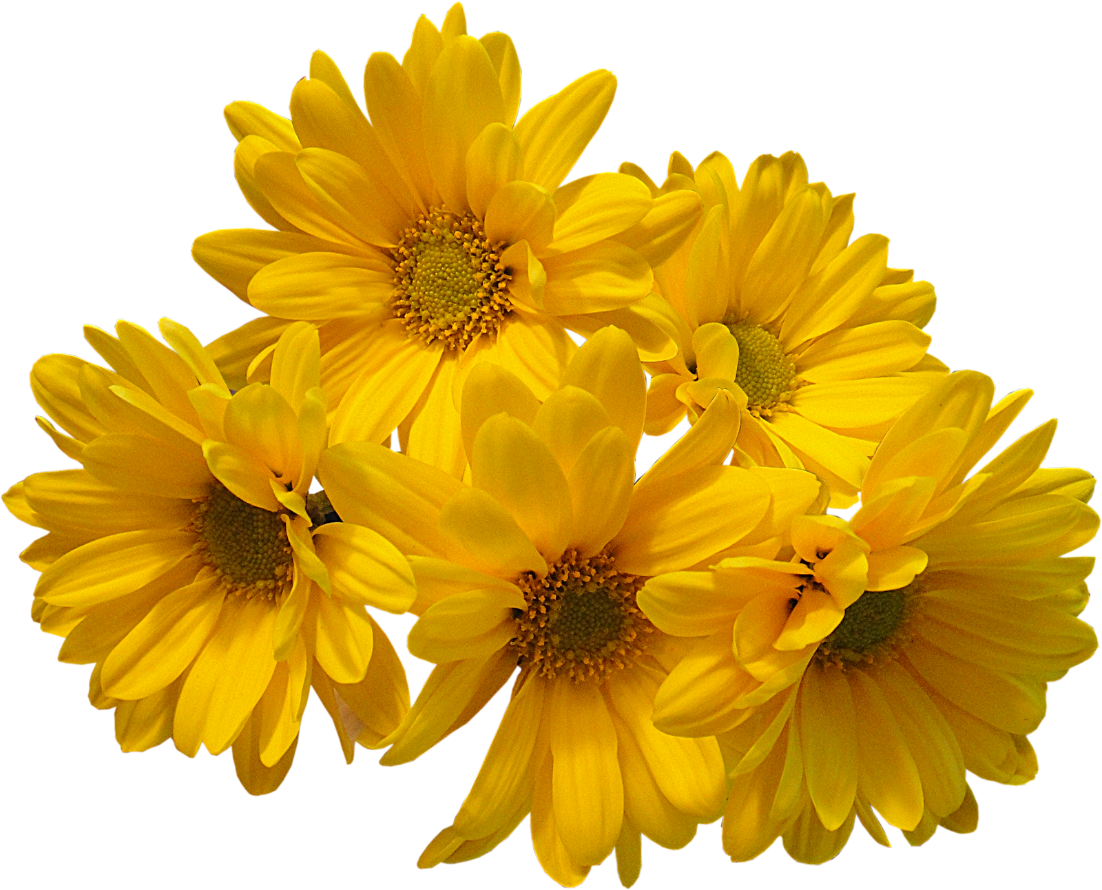 Yellow flowers png. Bouquet transparent image mart
