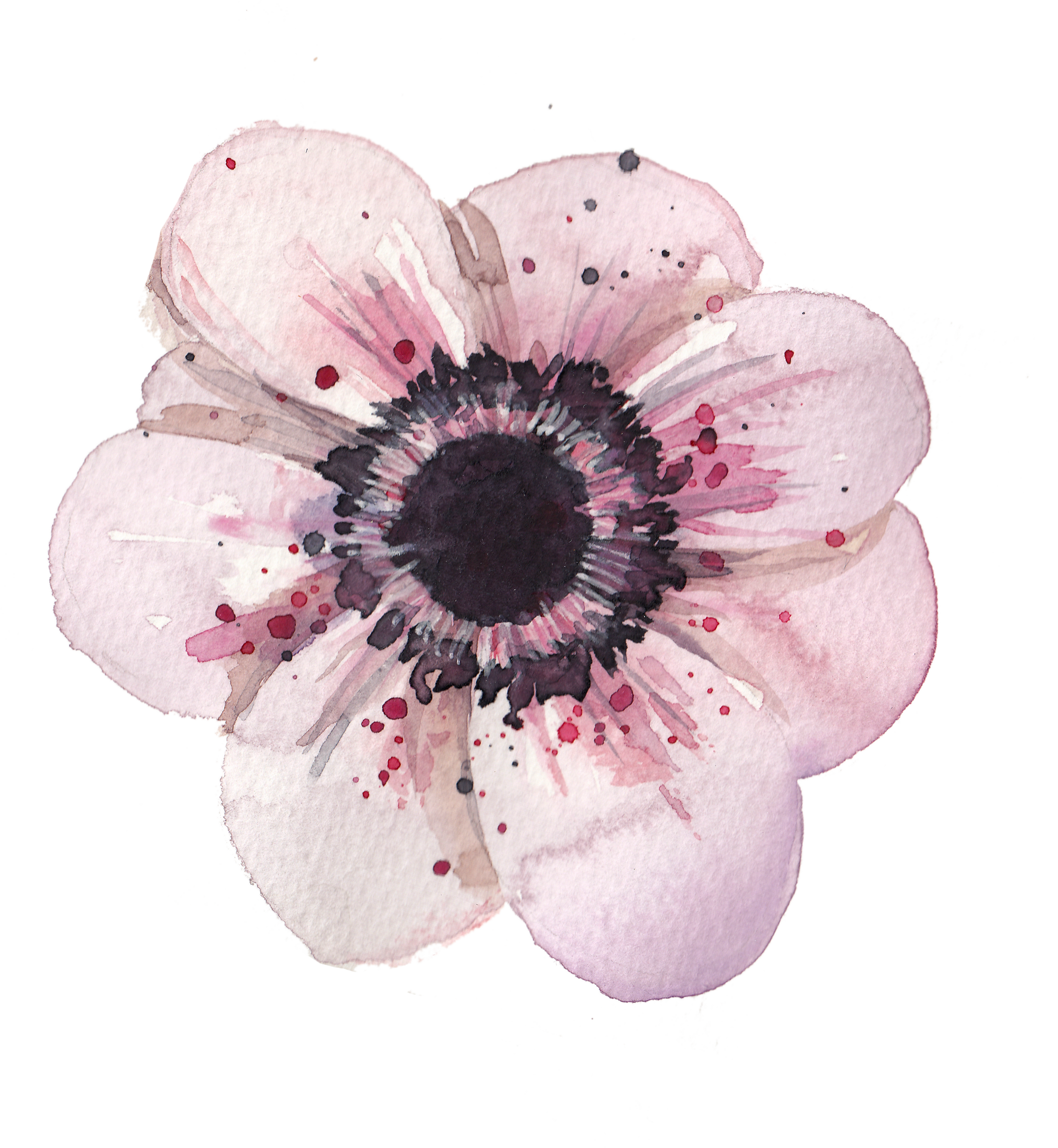 Bouquet vector anemone. Poppy flowers watercolor painting