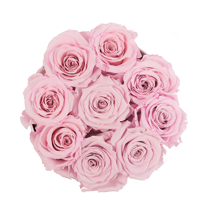 Bouquet vector light pink rose. Small white box with