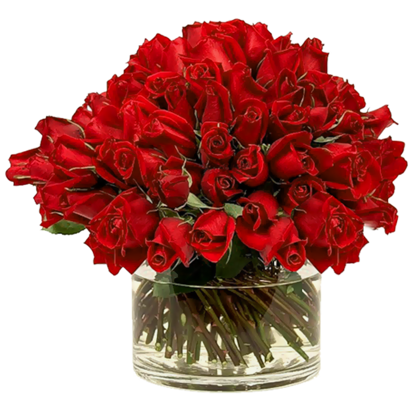 Vase vector red. Free roses images download