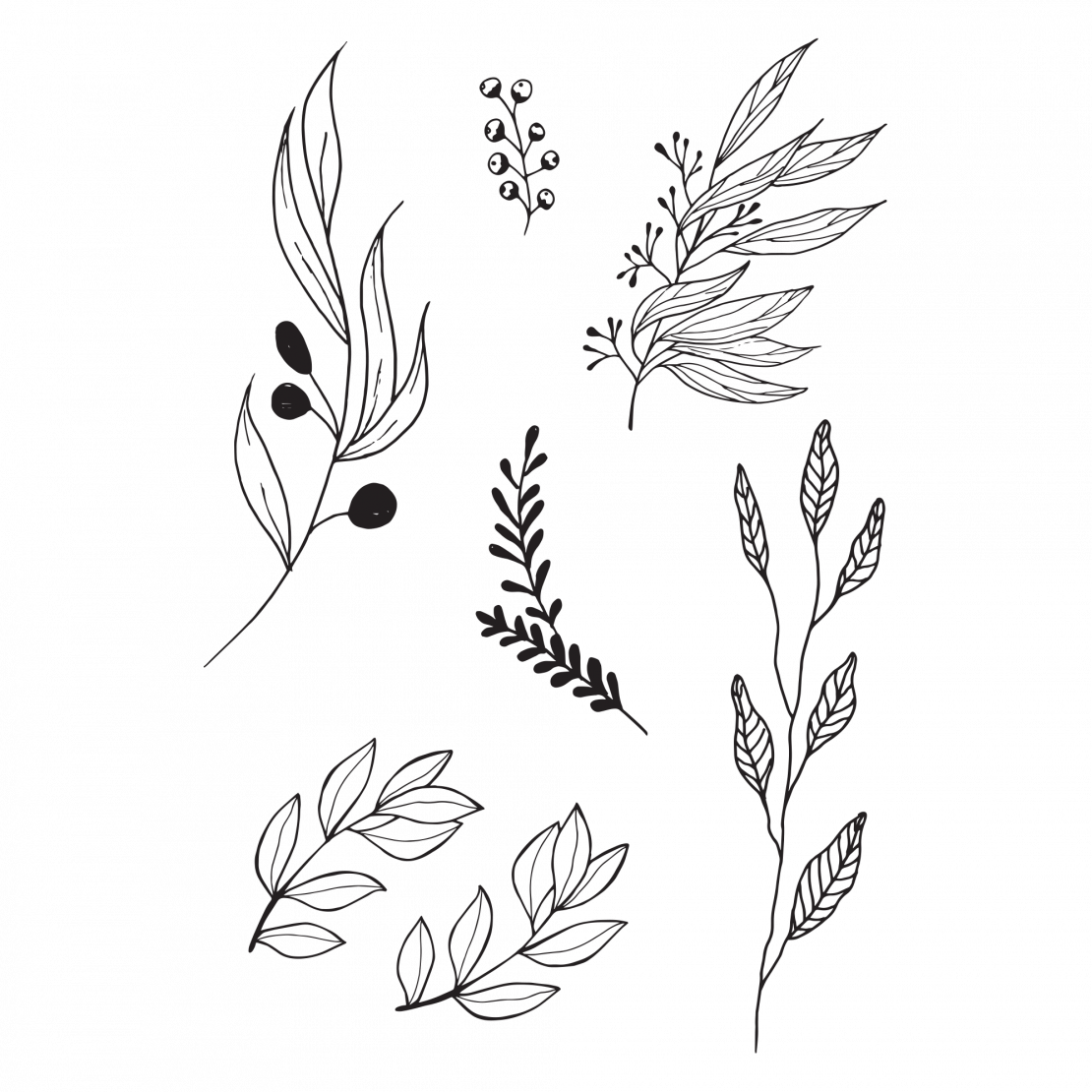 Bouquet vector olive. Image result for leaves