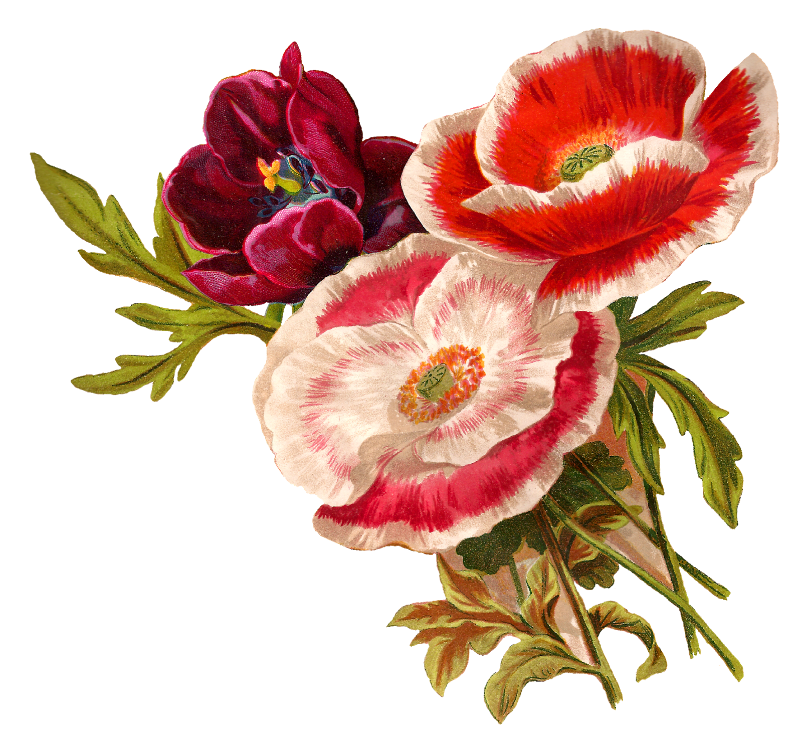 Bouquet vector peony. Png library illustrated