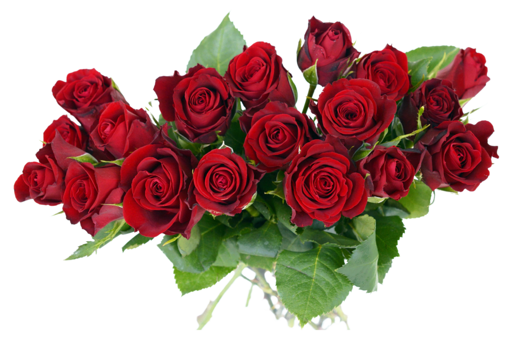 Vector bouquet rose. Free png transparent image