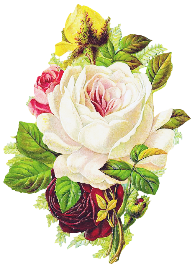 Bouquet vector vintage. Free graphic friday rose