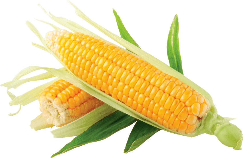 Bowl of corn png. Free images toppng transparent