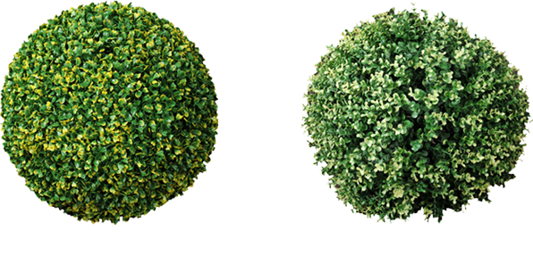 Boxwood hedge shrubs artificial png. Topiary trees balls factory