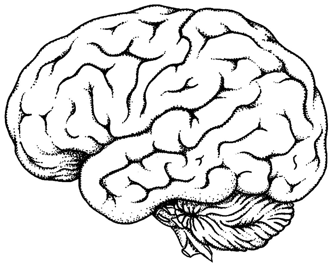 Brain clipart. Winsome ideas image result