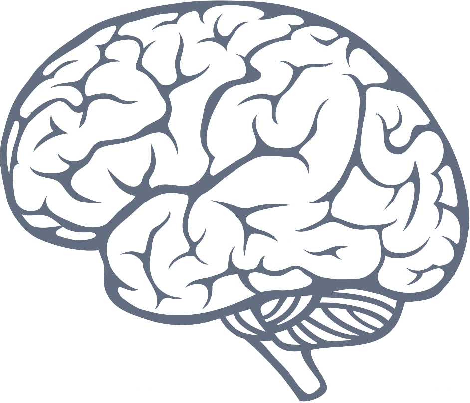 brain transparent png