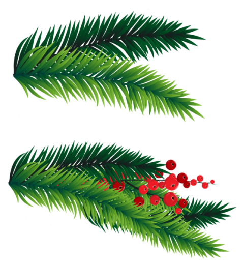 Branch clipart decorative branch. Pine branches decoration png