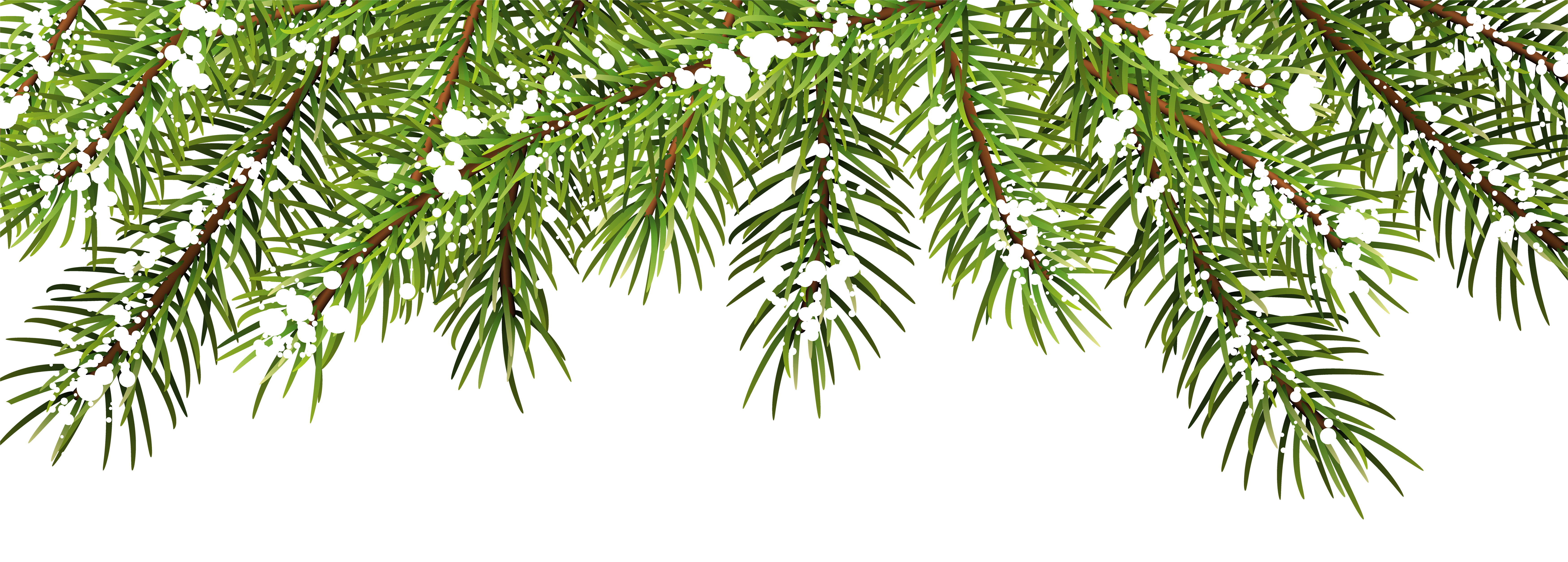 Pine branches png. Christmas decor clip art