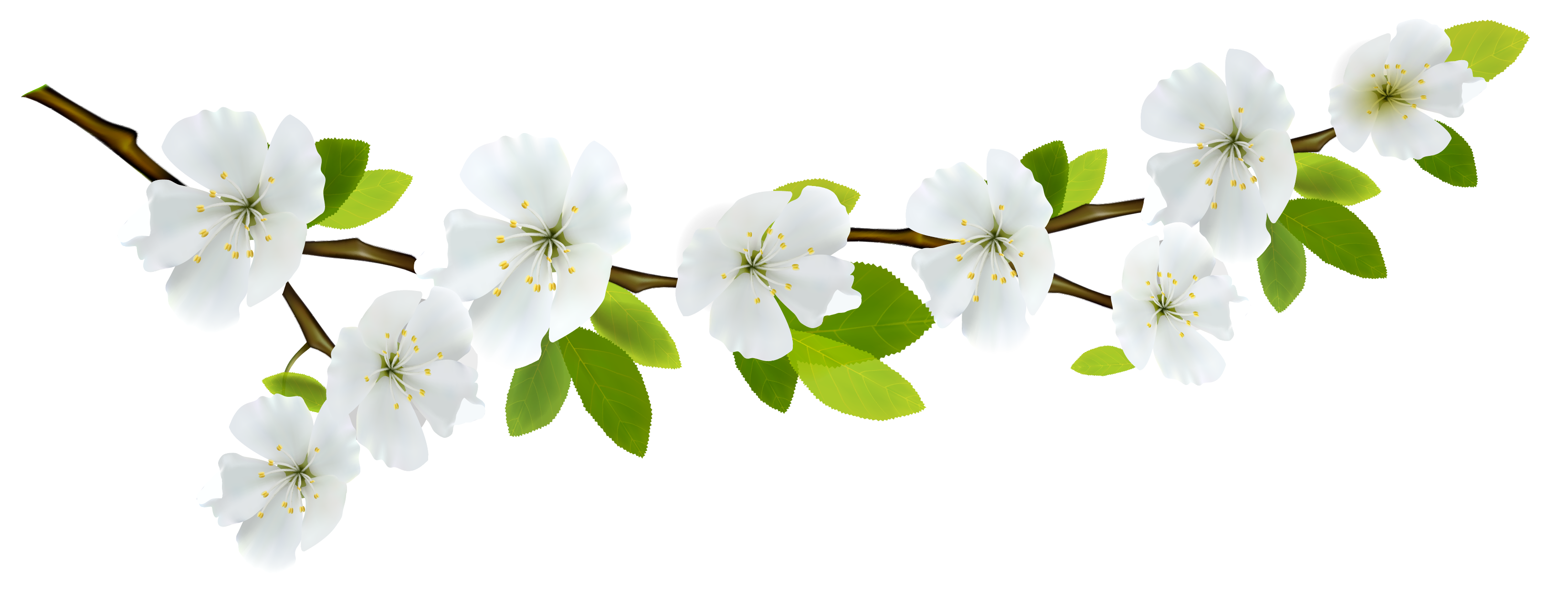 Branch clipart png. Spring white gallery yopriceville