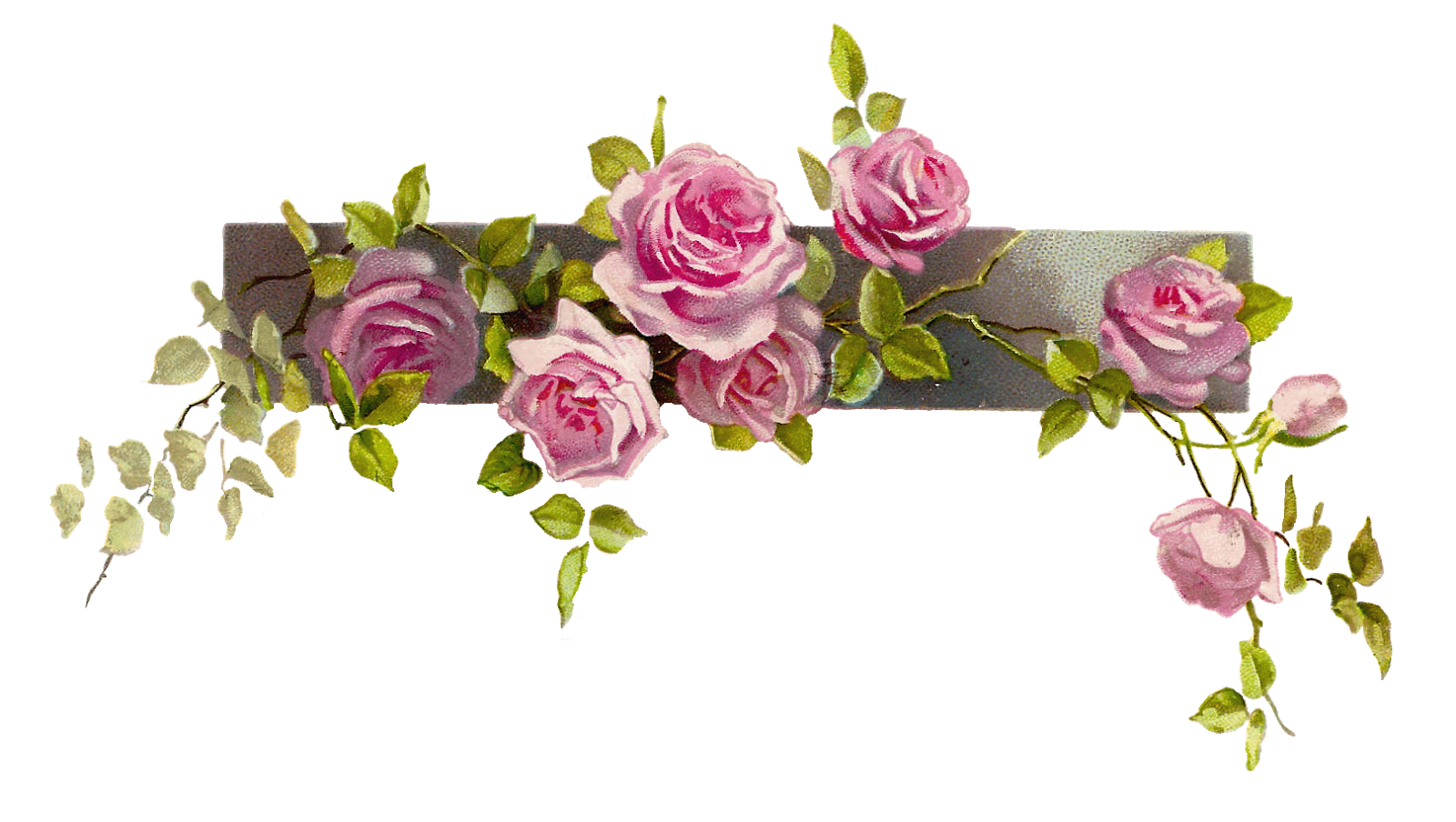 Flower line png. Graphic vintage pink rose