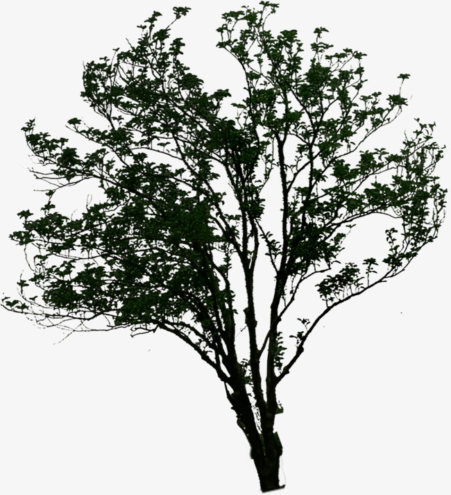 Branch clipart thick. Three dimensional dense branches