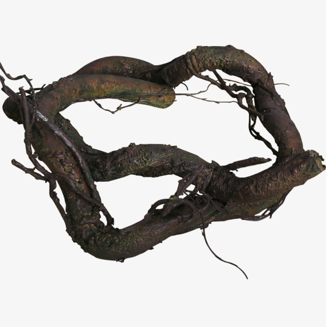 Branch clipart thick. Roots root plant png