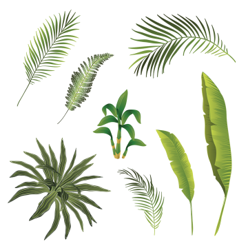 Branches and leaves png. Botanical vector png royalty free library