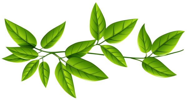 Branch leaves png. Transparent images all free