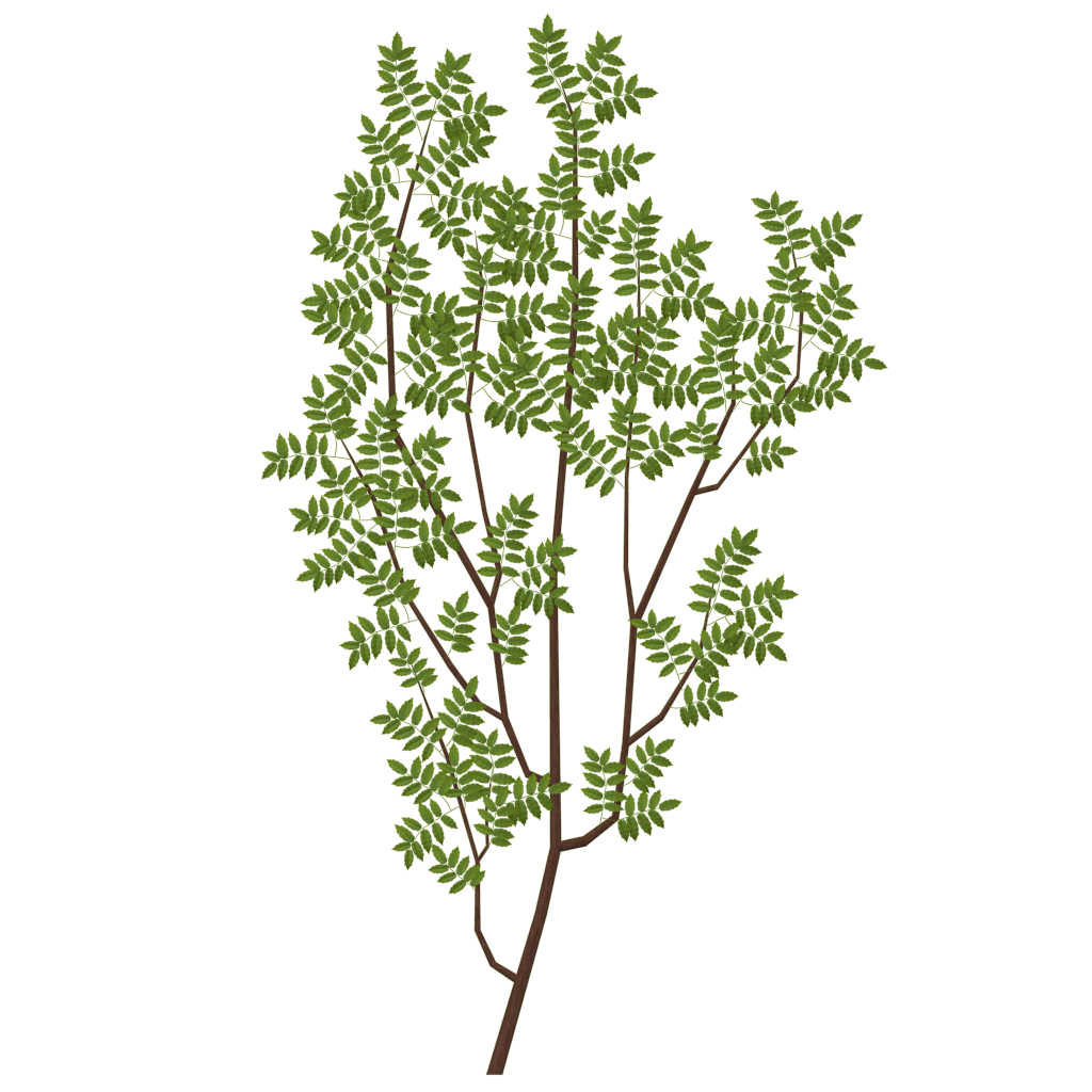 branch texture png