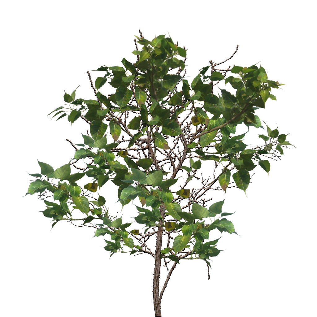 Branch texture png. Tree image mart