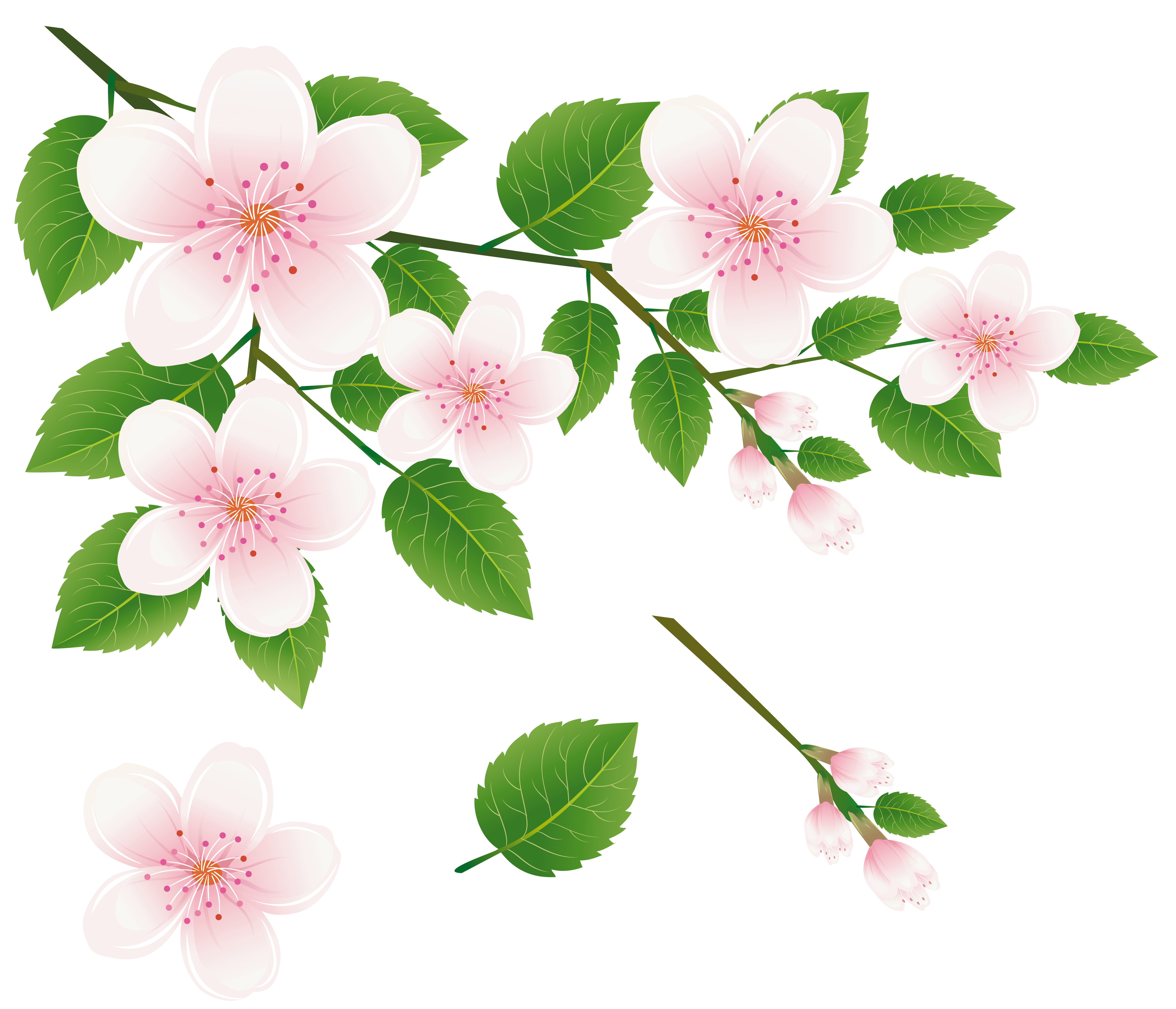 Branch with flowers png. Spring tree clipart picture